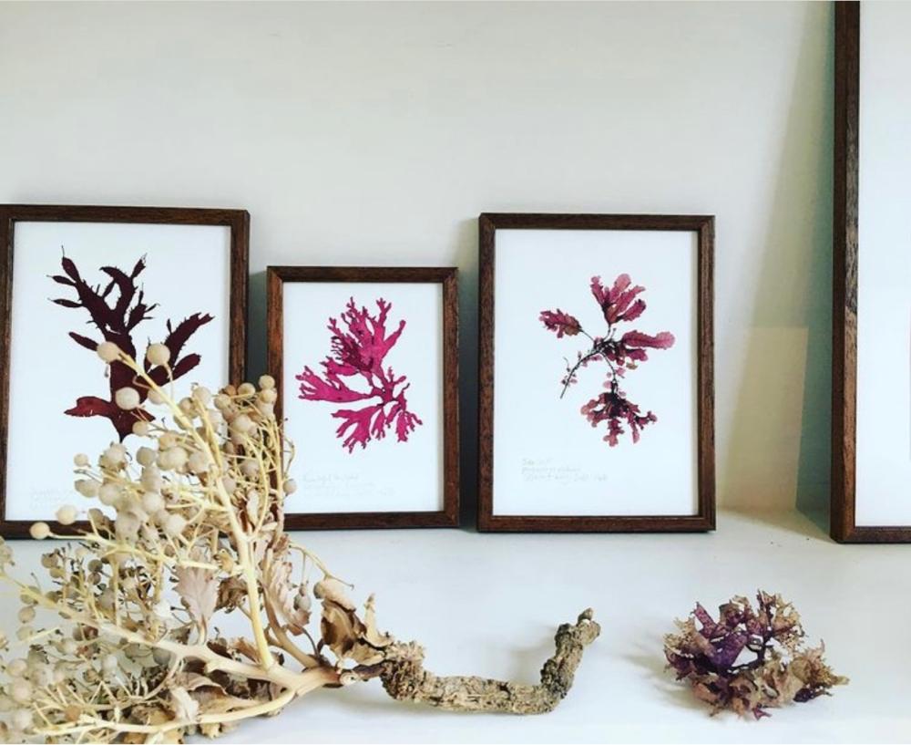 three framed pressed seaweed